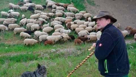 Jürgen Endress mit Hund und Schafherde zwischen Lahn und Autobahn unterwegs.  Foto: Lothar Rühl