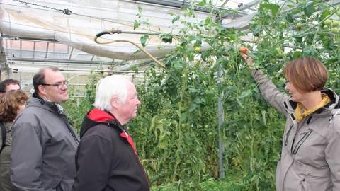 In den Gewächshäusern reifen noch die Tomaten, auf die Bettina Brandt stolz aufmerksam machte, da alles ohne Gentechnik wächst. Fotos: Scherer