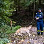 An der L3408 zwischen Löhrbach und Birkenau suchten die Rettungskräfte am Dienstag nach den Vermissten. Foto: Sascha Lotz
