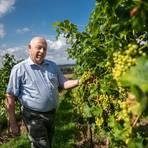 Reinhard Antes ist Spezialist für die Veredelung von Reben – nicht nur für den Weinbau. Archivfoto: Sascha Lotz