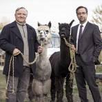 Thiel (Axel Prahl) und Boerne (Jan Josef Liefers) ermitteln in einer Hippie-Kommune. Liefers stand zuletzt wegen der Aktion #allesdichtmachen öffentlich in der Kritik. Foto: ARD