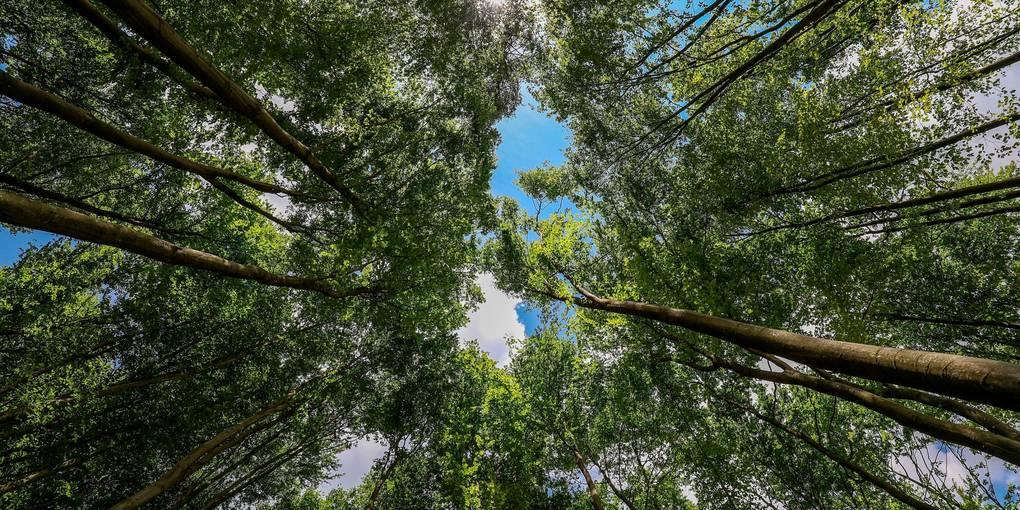 Wenn im Braunfelser Stadtwald künftig Bäume gefällt werden, dann übernimmt den Verkauf die Holzvermarktung Mittelhessen GmbH.  Archivfoto: Joaquim Ferreira