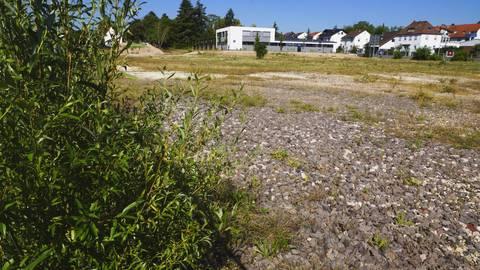 Nur Unkraut gedeiht zurzeit auf dem Gelände der ehemaligen Rüdesheimer Sektkellerei. Schon vor vier Jahren wurden die Gebäude abgerissen, vor zwei Jahren wurde ein Bebauungsplan verabschiedet. Wer aber mehr zur Zukunft des Geländes wissen will, muss sich noch einige Wochen gedulden. Foto: Wolfgang Bartels