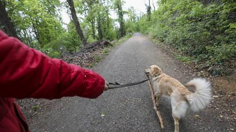 Der Hund an der Leine, so wünschen es sich Förster, Jäger und Landwirte. Eine Pflicht ist es nicht überall. Foto: Guido Schiek