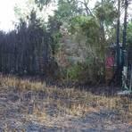 Am Dienstagabend brannte bei Schierstein ein Getreidefeld. Durch das Feuer wurden auch eine Hecke und ein Holzverschlag zerstört.  Foto: Wiesbaden112.de