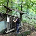 Einer der Vorschläge des Odenwaldklubs ist der Hammelbacher Klangwanderweg.Archivbild: Manfred Giebenhain