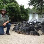 Tierpfleger Brandon kümmert sich im Tierpark Gatorland um die Alligatoren.Foto: Julia Krentosch  Foto: Julia Krentosch