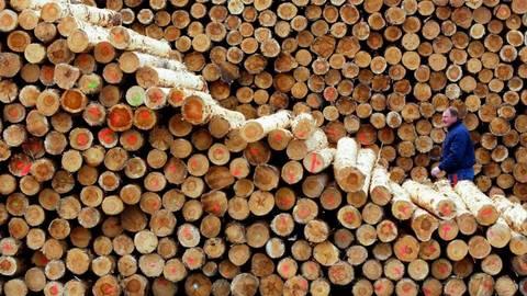 Bundeskartellamt Mahnt Mehr Wettbewerb Beim Holzverkauf In Hessen An