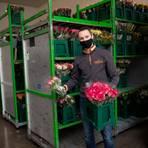 """Blumenhändler Ferry Overdevest - hier in der zentralen Lagerhalle in Hirschberg an der Bergstraße - ist mit dem Geschäft aufgewachsen. Sein Vater ist der Gründer des Familienbetriebs """"Oranje Blumen"""", der seit 1986 in der Rhein-Neckar-Region ansässig ist. Foto: Marco Partner"""