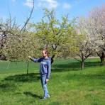 Auf einer typischen Streuobstwiese bei Laubuseschbach schaut sich Martin Heil die Blüten eines Apfelbaums an.  Foto: Dorothee Henche