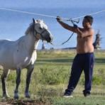 Pferde gehören für die Nomaden im Norden des Landes zum Alltag.Foto: Tibor Fuisz   Foto: Tibor Fuisz