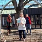 """Die Sprechwissenschaftlerinnen Elena Bertram (v.l.), Eva Maria Gruß und Professorin Kati Hannken-Illjes stehen im Alten Botanischen Garten vor dem """"Baum der Möglichkeiten"""", an dem es in dem Projekt """"Gesprächsgarten"""" auch um die Chancen gehen soll, die die Corona-Krise bietet. Foto: Manfred Hitzeroth"""