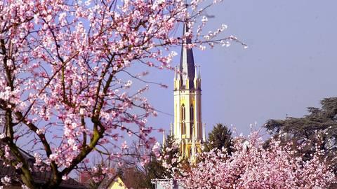 Die Natur erwacht trotz Corona, wie jedes Jahr auch sichtbar rund um die Erbacher Johanneskirche. Archivfoto: Heinz Margielsky