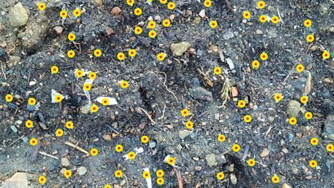Die Farbmarkierungen der Vogelschützer auf dieser Aufnahme stehen beispielhaft für Plastikteilchen. Entstanden ist das Foto im Winter, bevor das Material auf der Abraumhalde mit einer weiteren Schicht abgedeckt wurde.  Foto: Vogelschutzgruppe Niederscheld