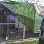 Folie über dem Hühnerstall dient als Schutz für die Tiere. Foto: Vollformat/Volker Dziemballa