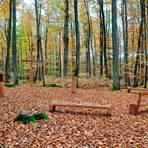 Den Buchen und Eichen auf dem Waldfriedhof Merenberg geht es gut. Ob die trockenen Sommer den Bäumen doch zugesetzt haben, wird sich erst in einigen Wochen zeigen.  Foto: Ulrike Sauer