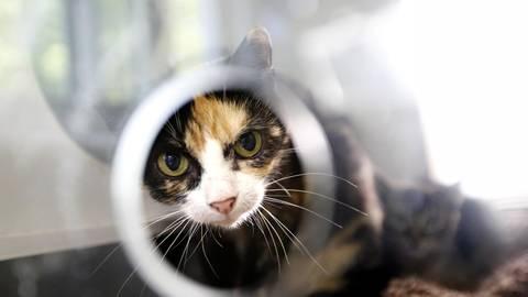 Ein Fundkätzchen, wie sie im Tierheim früher häufiger strandeten. Durch die Katzenschutzverordnung ist die Zahl der Fundkatzen seit 2015 extrem rückläufig, die verwilderten Katzen sind insgesamt gesünder. Archivfoto: André Hirtz