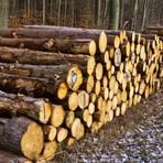 """Stammholz ist weltweit gefragt. USA und China kaufen den deutschen Markt leer, die Preise für Bauholz steigen. Doch bei den kommunalen und privaten Waldbesitzern kommt davon nichts an. Deswegen wird schon mit """"Sägestreik"""" gedroht. Foto: Wolfgang Bartels"""