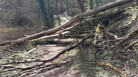 Mehrere Bäume haben sich an der Hauseley aus dem Hangbereich gelöst und sind abgerutscht. Foto: Stadt Weilburg