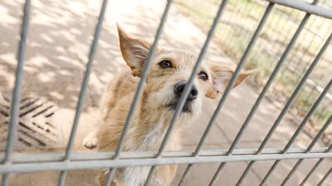 Immer wieder werden Tiere im Wiesbadener Tierheim abgegeben.  Foto: Lukas Görlach