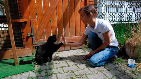 """Polly schlägt mit ihrer Pfote ein """"High Five"""" ein. Die Dieburger Katzenpsychologin Carmen Schell hat sich vor fünf Jahren mit """"Cattalk"""" selbstständig gemacht.  Foto: Christina Kolb"""