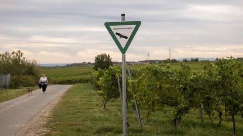 """Das Landschaftsschutzgebiet """"Südhang und Südplateau"""" bleibt weiterhin bestehen: Das OVG Koblenz hat ein Normenkontrollverfahren abgewiesen. Archivfoto: hbz/Stefan Sämmer"""