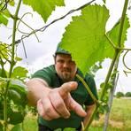 Im Weinberg fängt die Arbeit an, wenn die Qualität in der Flasche stimmen soll: Winzer Johannes Bürkle. Archivfoto: Dirk Zengel