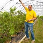 Hansgeorg Münch zieht seine Heidelbeeren im Folientunnel. Er zeigt die Größe an, die die Pflanzen erreichen können.  Foto: Ulrike Bernauer  Foto: Ulrike Bernauer