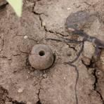 Nach Rodungsarbeiten auf dem Pfadberg traten Relikte aus der Vergangenheit zutage, etwa ein Spinnwirtel. Das ist ein kleines Tongewicht, das zum Spinnen verwendet wurde. Foto: Reinhard Wilfert